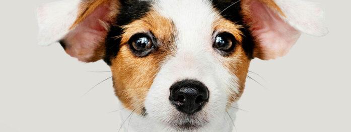 Colabora en nuestra campaña de recogida de alimentos y material para mascotas, ellos saldrán ganando y tú también